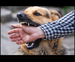 dog biting hand